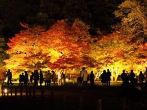 千入の森ライトアップ