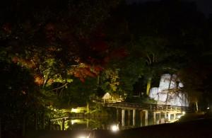 亭舎公開「お座敷から眺める夜の紅葉」