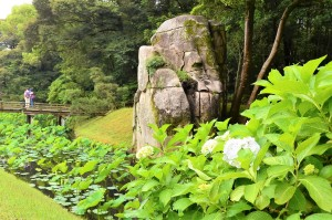 アジサイと大立石