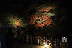 亭舎公開 お座敷から眺める夜の紅葉