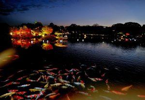 沢の池「幻想舞台」